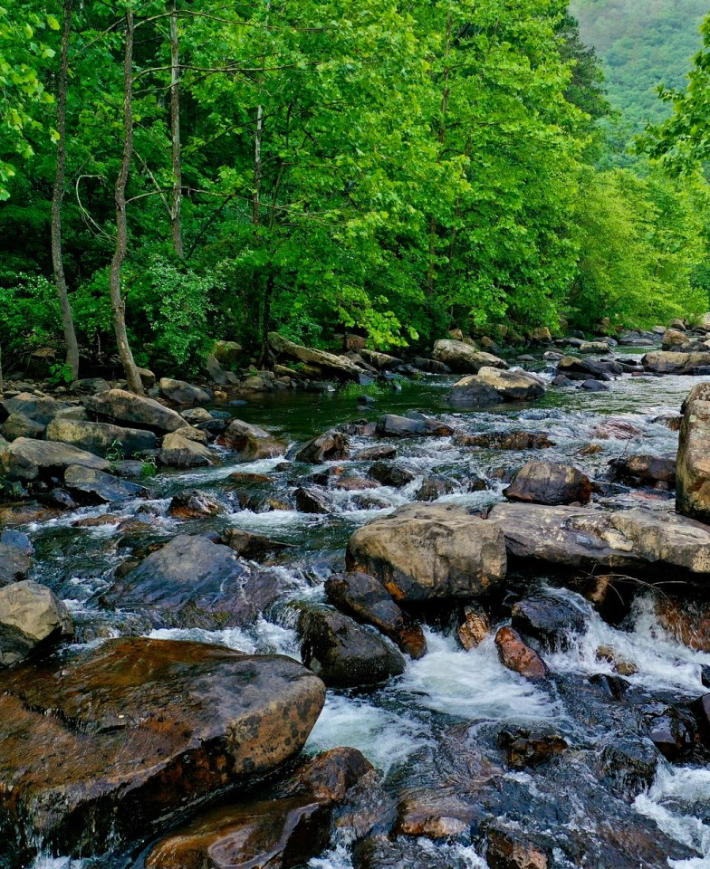 White water flowing over gray rocks through forest of green trees.  Photo by Mitchell Kmetz on Unsplash.